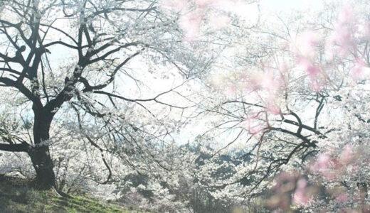 安曇野からー(55)