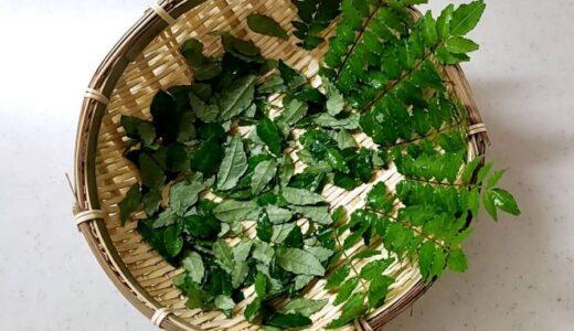 山椒の葉を食す